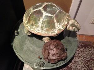 Dos Tortugas